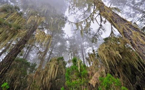 El bosque fantasma