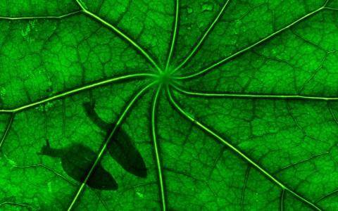 Habitantes de las hojas