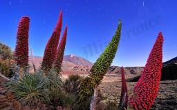 Las flores del volcán