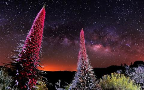 Los guardianes del Teide