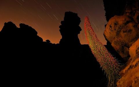 Maravillas de la flora canaria