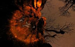 Viaje al centro del árbol