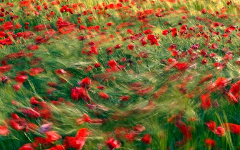El baile de las flores